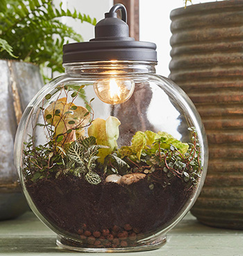 Mica Decorations Lamp Terrarium