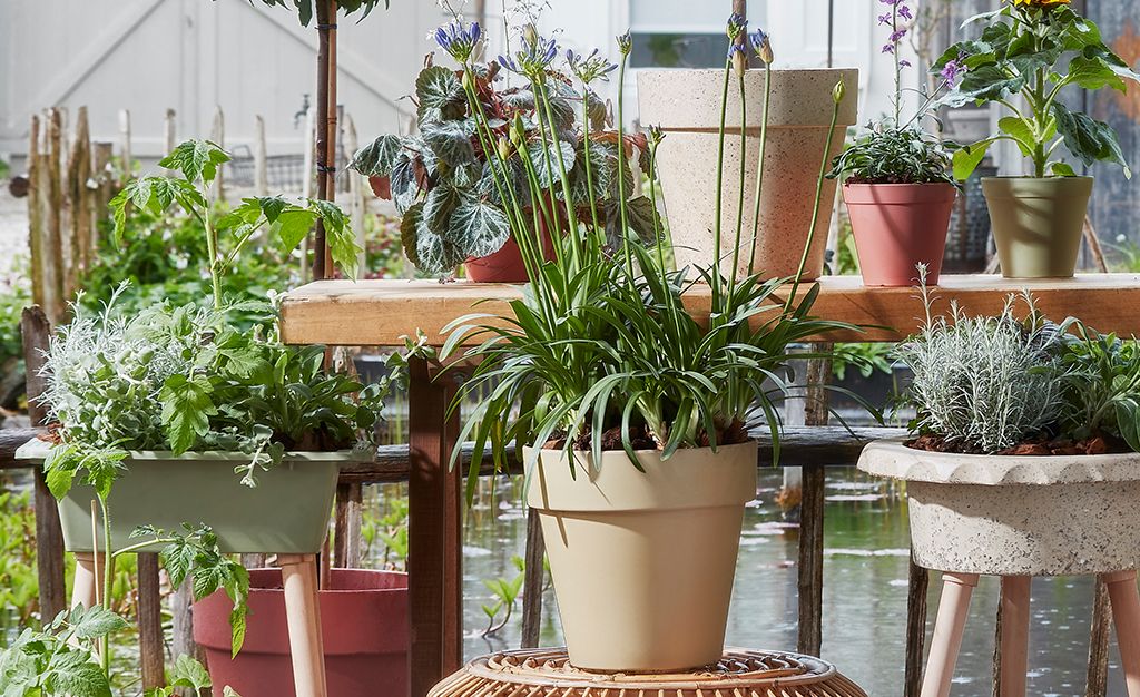 Sustainable enjoyment: go for greenery in the garden